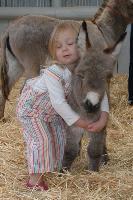 Donkey 12