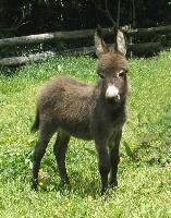 Donkey 20