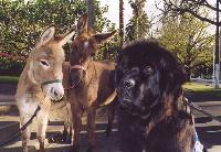 Donkey 21